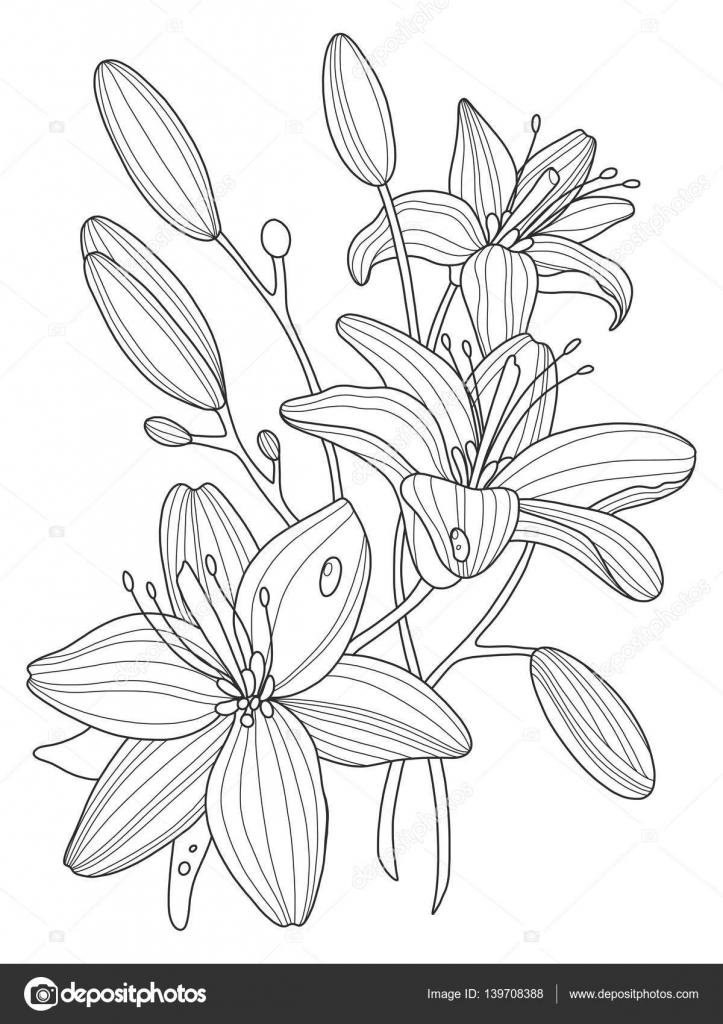 Flores De Lirio Para Colorear Ilustración Vectorial Del Libro