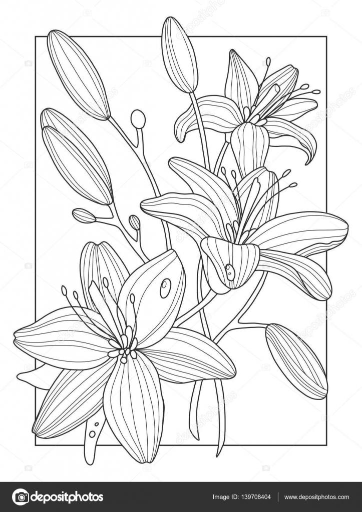 Flores De Lirio Para Colorear Ilustración Vectorial Del