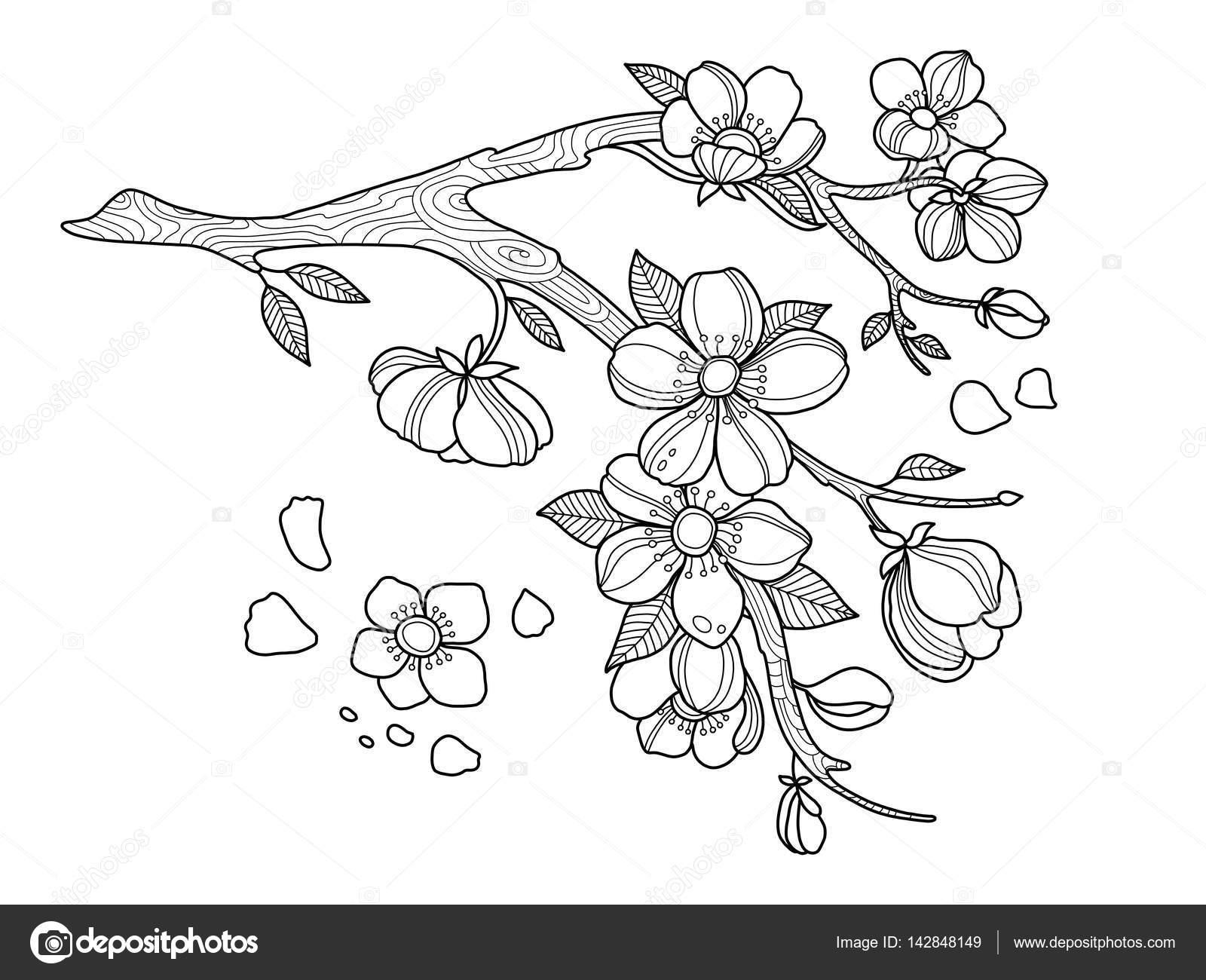 Ilustracja Wektorowa Kolorowanka Kwiat Wiśni Grafika