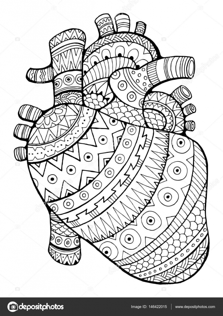 Corazón Humano Para Colorear Ilustración Vectorial Del Libro