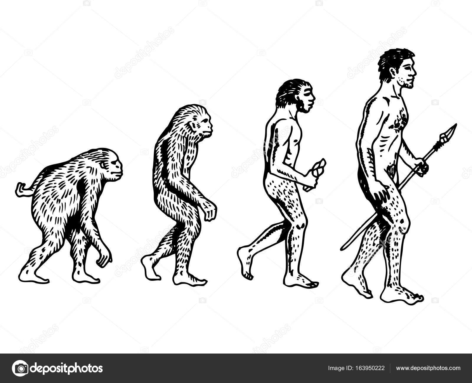 Ilustración de vector de grabado de la evolución humana — Archivo ...