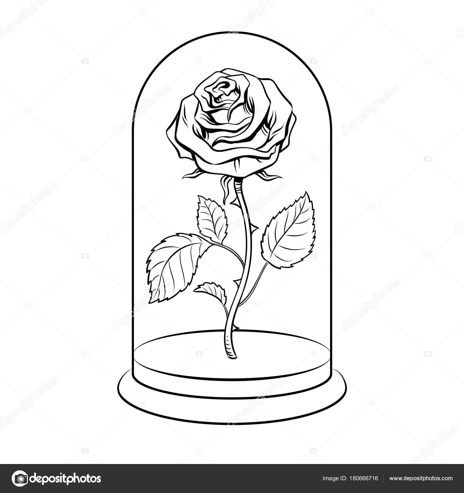 Rose Under Glass Cap Coloring Book Vector Stock Vector