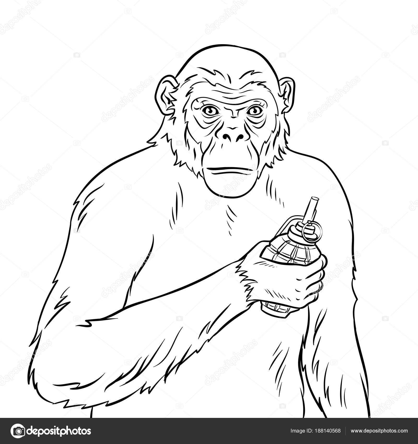 Affe mit Granate Färbung Vektor-illustration — Stockvektor ...