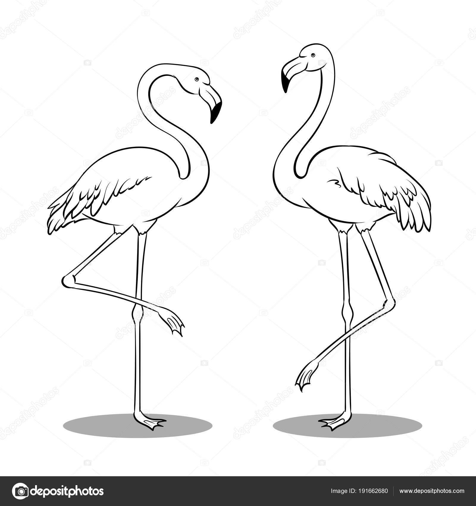 Pájaro rosado flamingo vector libro de colorear — Archivo Imágenes ...