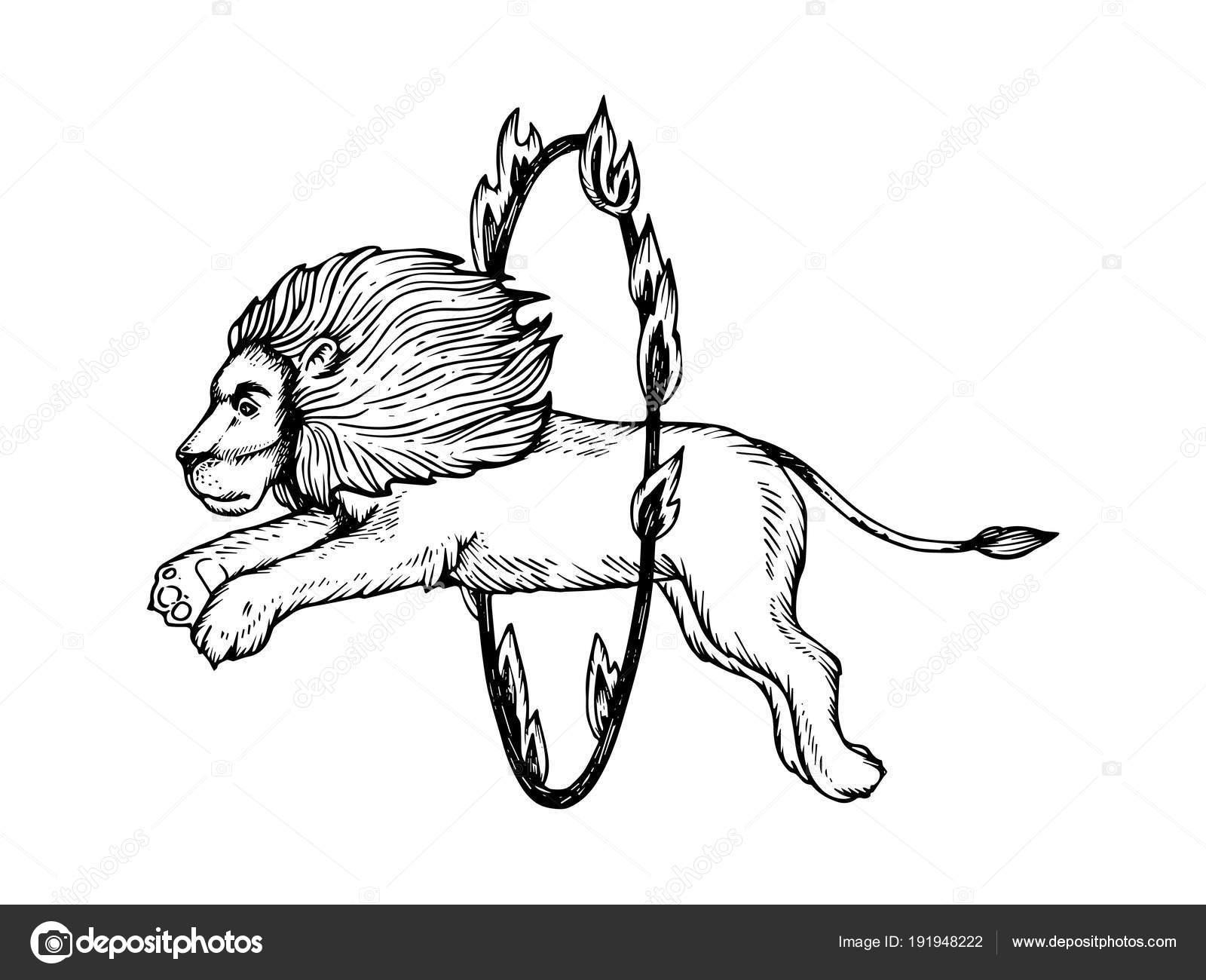 León de circo salta al vector de grabado de anillo de fuego — Vector ...