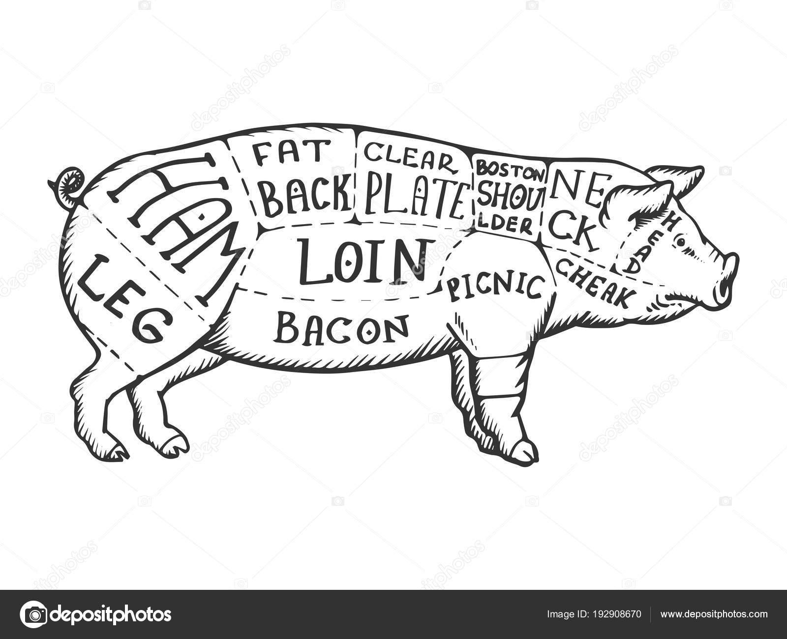 depositphotos_192908670 stock illustration meat diagram pig engraving vector meat diagram pig engraving vector stock vector © alexanderpokusay