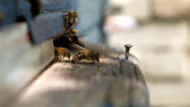 Včely létají v zásobníku. Vchod do úlu.