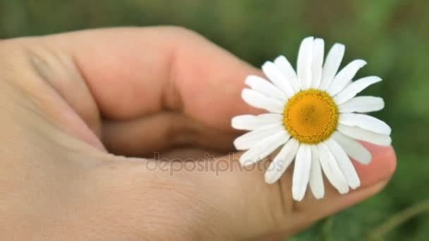 The girl is holding a daisy flower and twisting it.