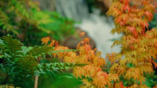 Vytáhněte zaměření střílel z počátku podzimní listovím k vodopádu v japonské zahradě