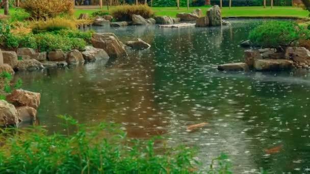 Střední teleobjektiv ukazující jezírko s Koi ryby v japonské zahradě kapky deště padající