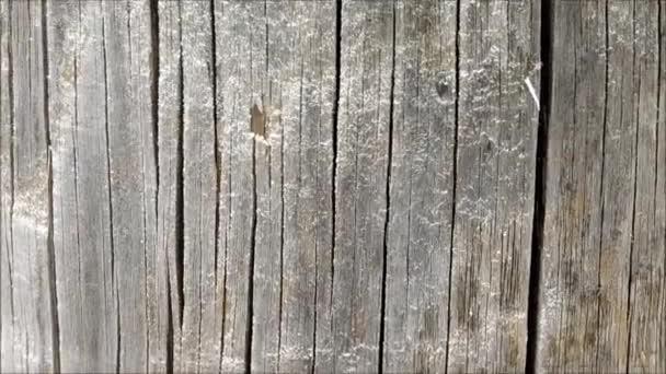 Wooden texture in the garden