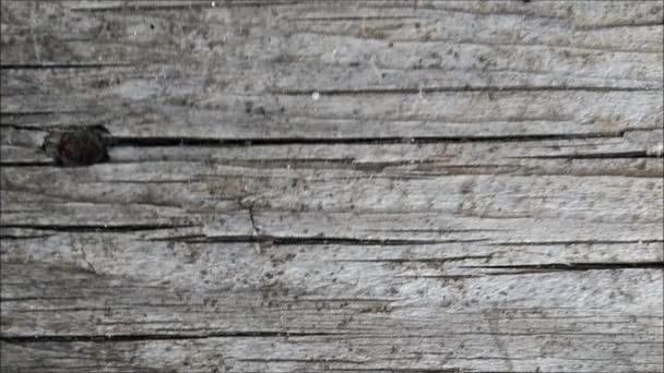 Dřevěná konstrukce v zahradě