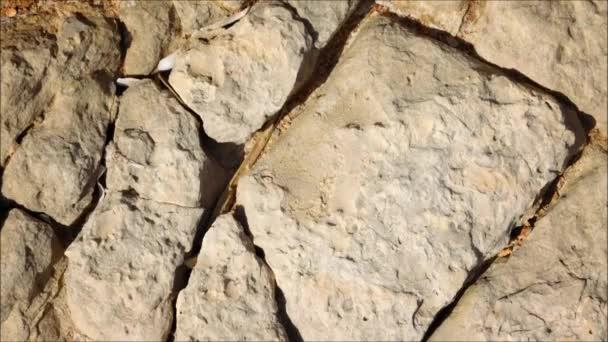 Textura kamene v zahradě