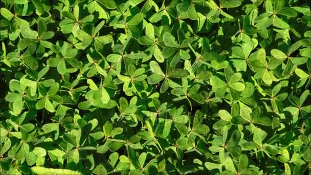 Texture of outdoor leaves in the garden