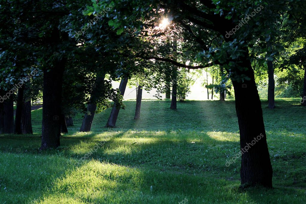 Evening Gatchina Park is lit by the summer sun