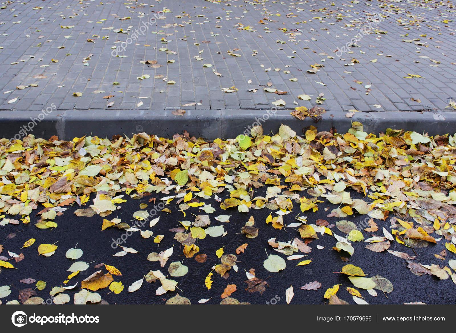 Asphalt Fußbodenplatten ~ Die kombination von gelb herbst blätter auf dem asphalt und