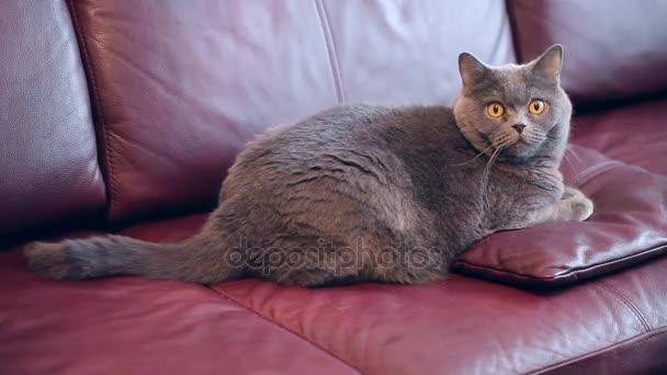 Katze sitzt auf einem Sofa auf einem Kissen.