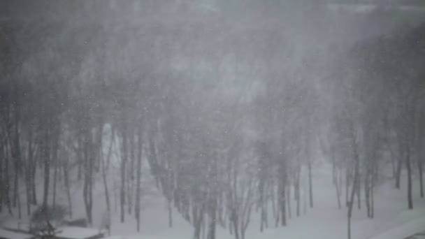 große Schneeflocken bedecken Stadt auf den Bäumen Hintergrund.