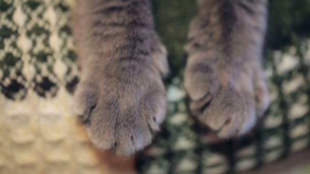 Close-up Of A Cats Paw. Plaid Background.