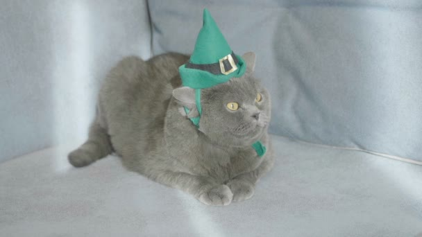 Macska zöld kalapban ünnepli St. Patricks Day zöld sör közelében St. Patricks Day. St. Patricks Day. Macska a hat. Brit macska.