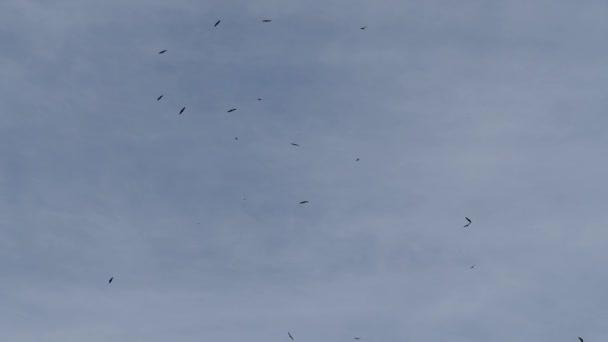 mnoho divokých orlů létání na modré obloze