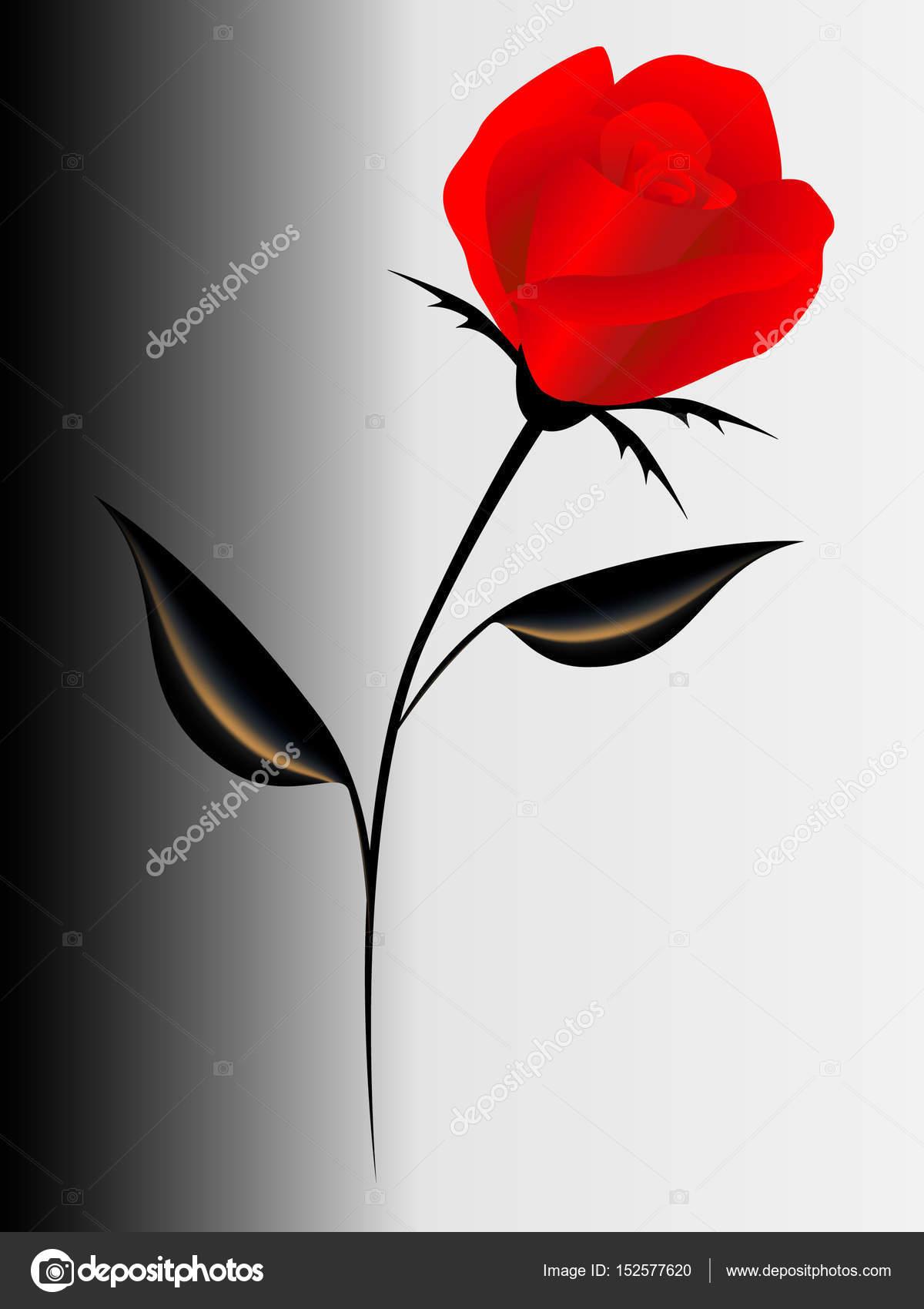 Sfondo Con Una Rosa Rossa Vettoriali Stock Zaqzaq81 152577620