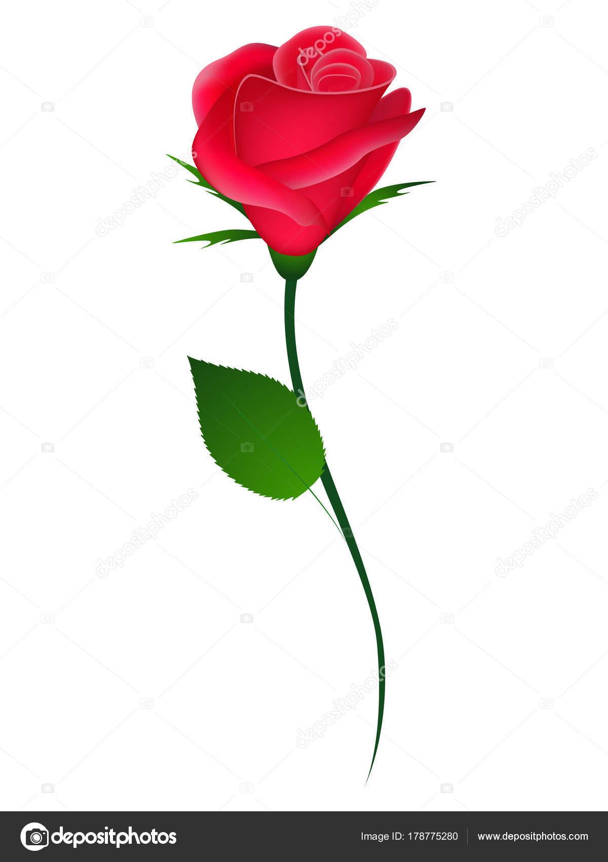 Disegni Rosa Rossa Rosa Rossa Elemento Sfondo Bianco Disegno