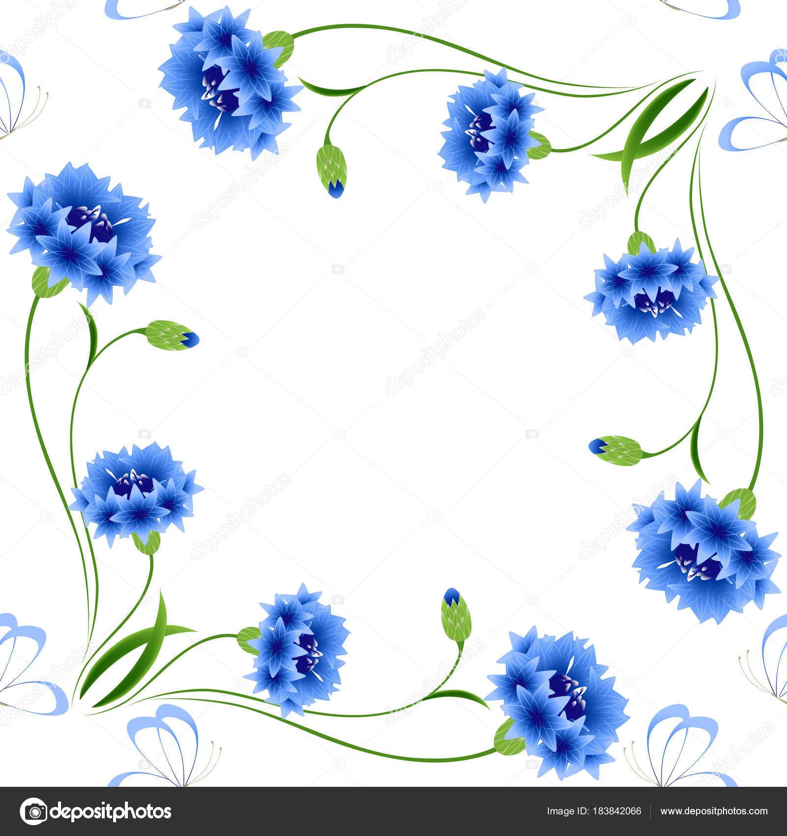 Голубые Кукурузные Цветы Бабочками Белом Фоне Бесшовный ...