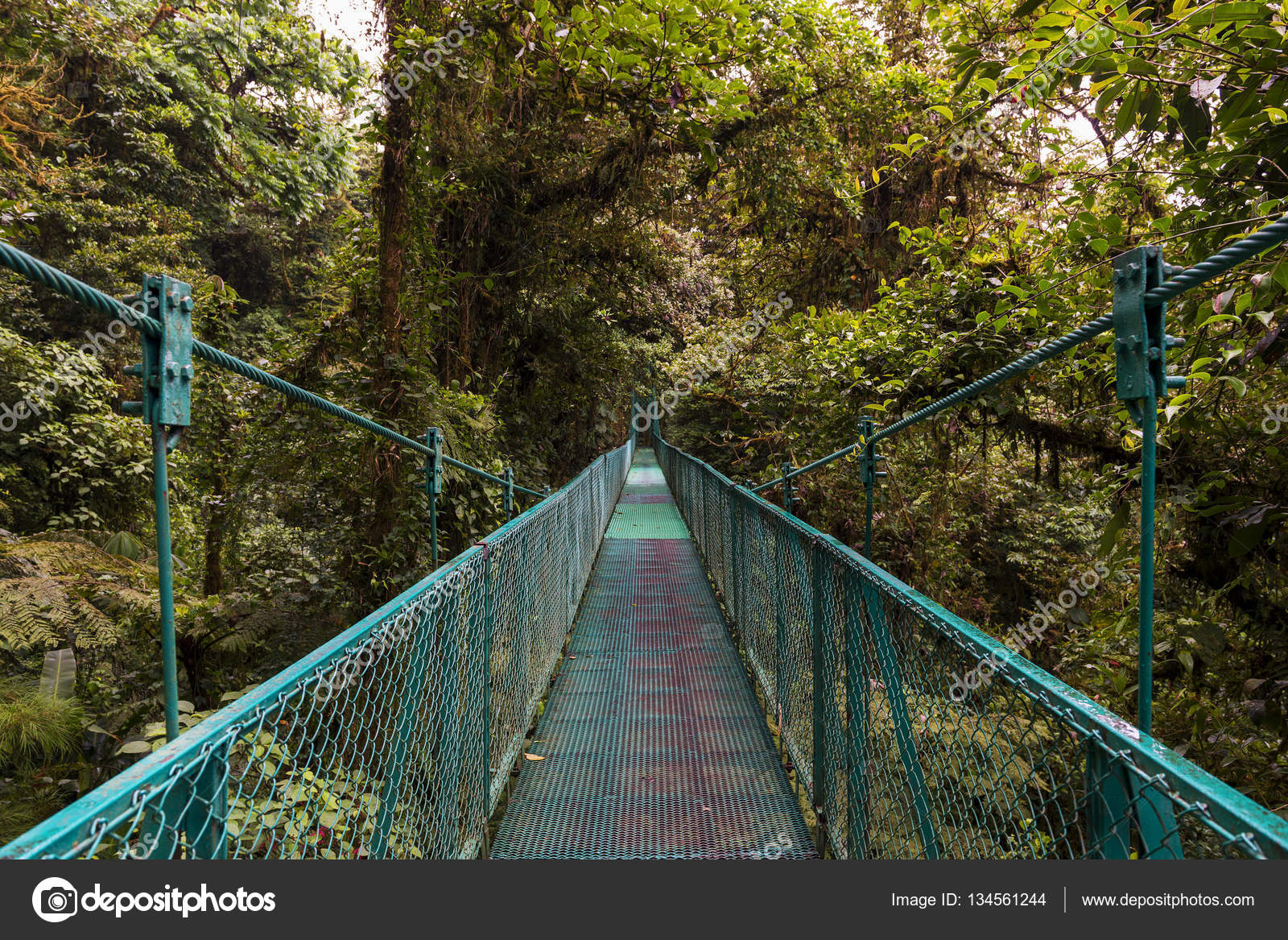 Suspended bridge over the canopy of the trees in Monteverde Costa Rica u2014 Stock Photo & Suspended bridge over the canopy of the trees in Monteverde Costa ...