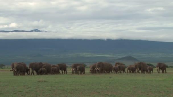 elephant family walking in the park in Kenya