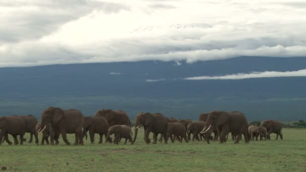 Elefántok halad át a kamera, mint a hatalmas Kilimandzsáró ragyog a háttérben