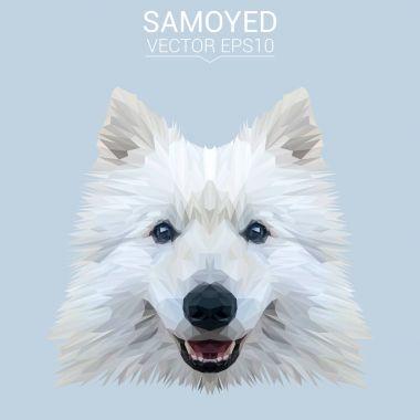 Samoyed low poly design
