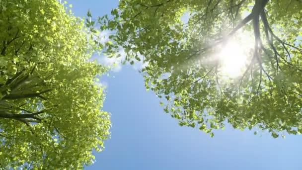 stromy foukající v létě.