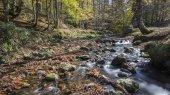 foresta in autunno nei Pirenei
