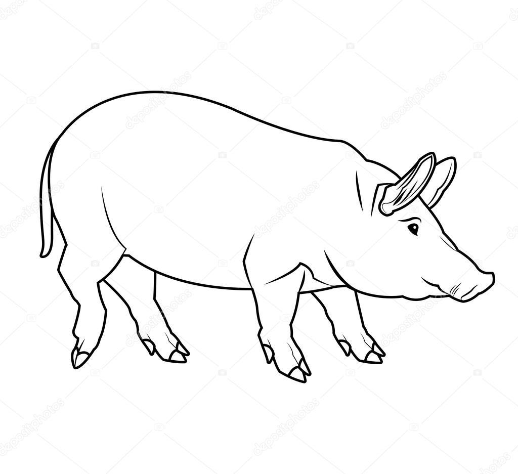 Disegno Di Maiale Bianco E Nero Vettoriali Stock Jemastock