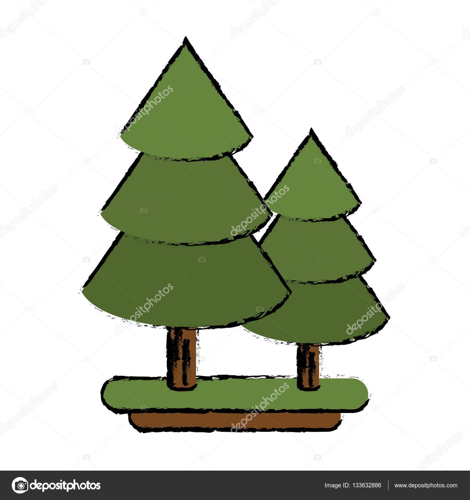 Hoja pino canadiense dibujo de pino canadiense rbol de for Arboles de hoja perenne para madrid