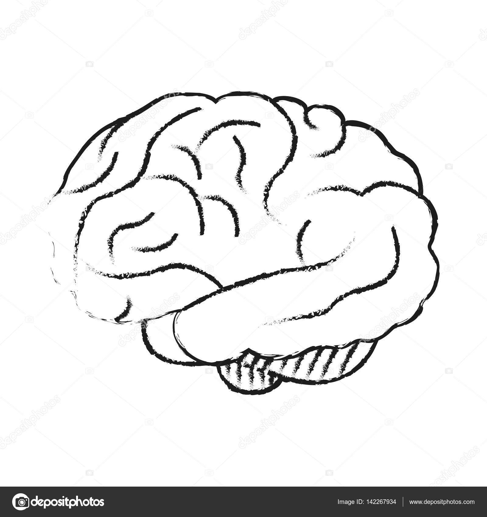 Icono del cerebro humano — Vector de stock © jemastock #142267934