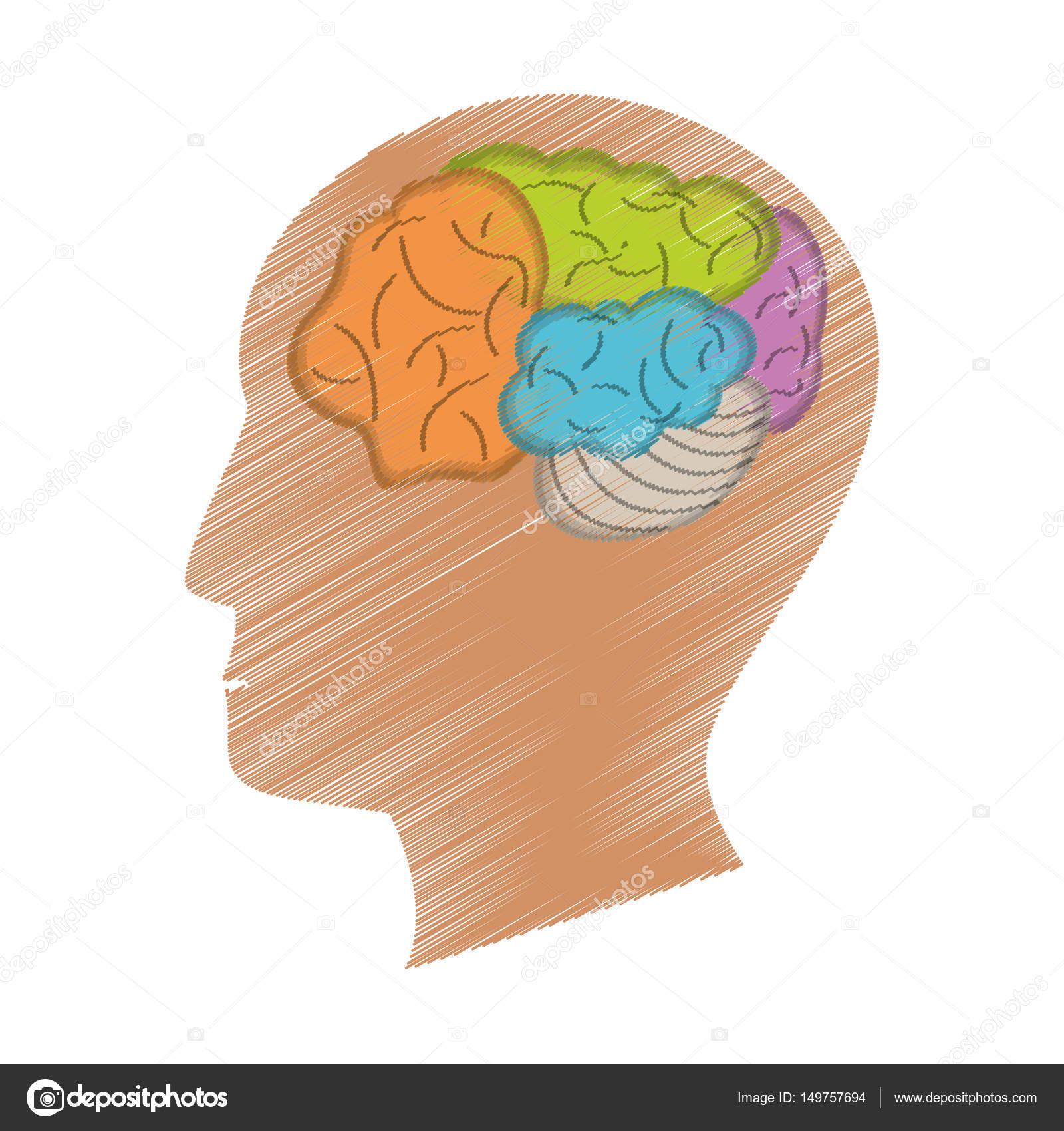 Brain Diagram Profile - Circuit Diagram Symbols •