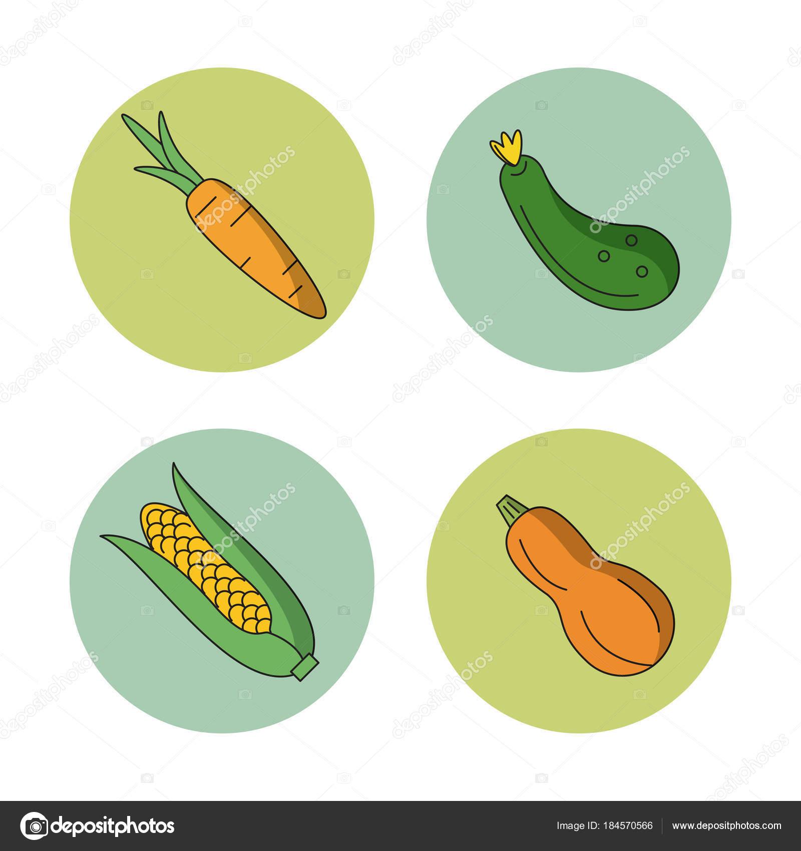 blanco de fondo con verduras zanahoria calabacín pepino y mazorca de ...