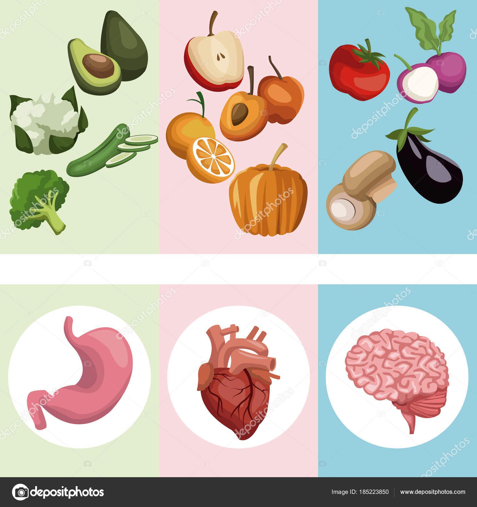 color banner poster verduras y frutas con los órganos cuerpo humano ...