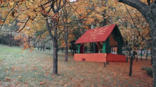 bird feeder hanging on the tree branch and swinging in an amazing autumn park forest 4k