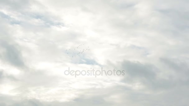 Flock of birds flying in the sky in circle together