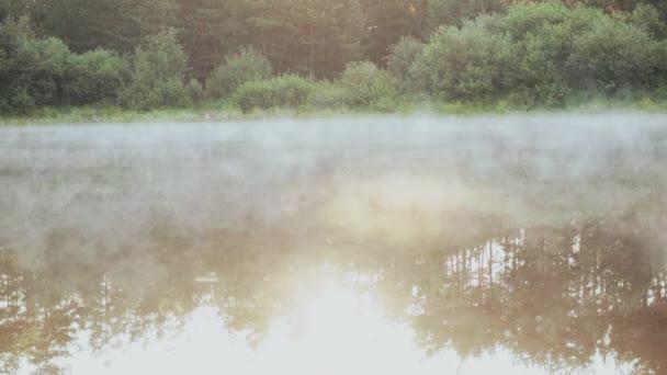 Schöne Naturlandschaft im Wald. Der Nebel, weißer Rauch über dem Wasser, ruhige See