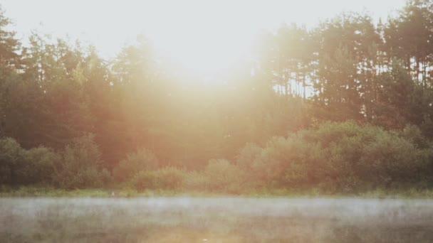 Mlha se vznáší nad vodou, jezero. Krásné ráno krajina v lese. Sluneční paprsky jsou lesklé.
