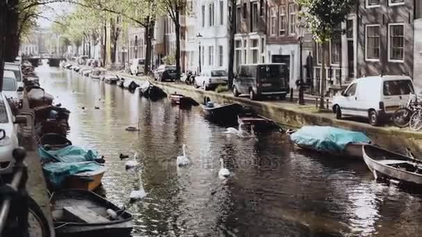 Amsterdam, Nizozemsko. řeka s vodních ptáků a čluny. Nádherné scenérie divoké labutě a kachny v podzimní město kaluž