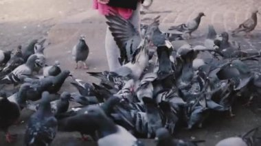 Little European girl surronded by birds. Slow motion. Excited cute female kid looks at big flock of pigeons, city square