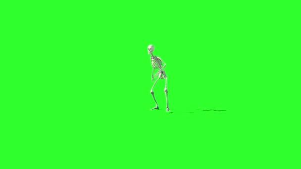 animaci kostry chůze. GI vykreslení. Zelená obrazovka záběry. Koncept Halloween