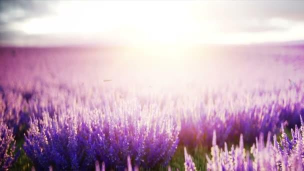 Motýli v levandulové pole. pojetí přírody. vysílání. Realistické animace 4 k