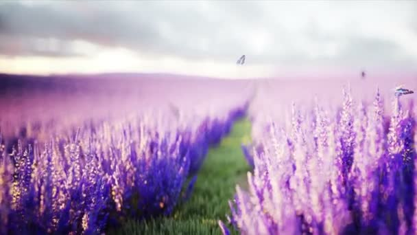 butterflies in lavender field. concept of nature. broadcast. Realistic 4k animation.