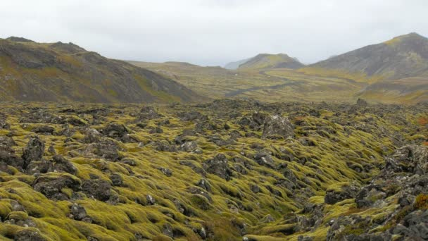 lávové pole mezi horami v podzimním čase v severské zemi, něž zažloutlé mech